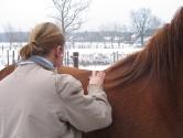 vaccinatie paarden