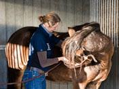 ostheopathie bij paarden